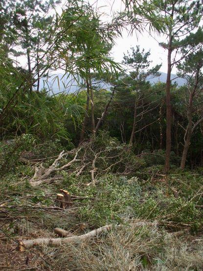0802伐採作業中2.JPG