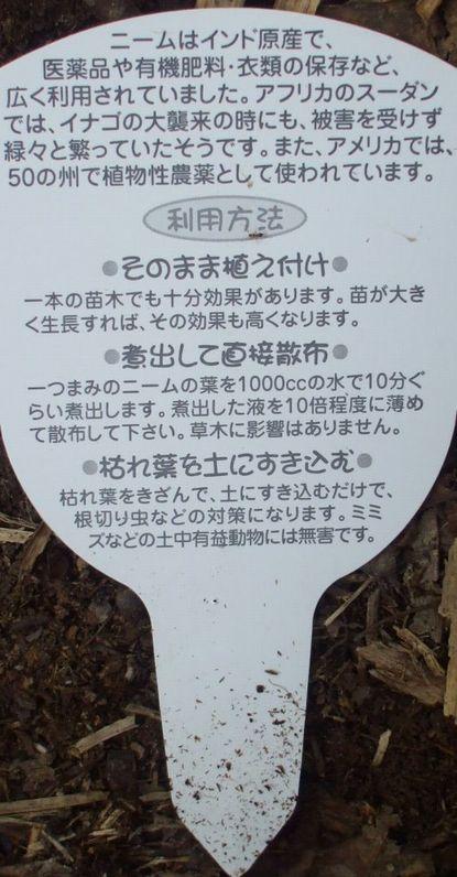 インドニーム2.JPG