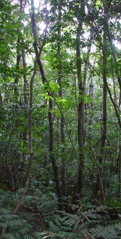 コーヒー山の雑木林1129.JPG