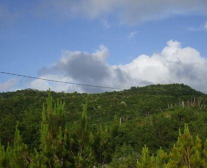 コーヒー山の全景(西側から撮影).JPG