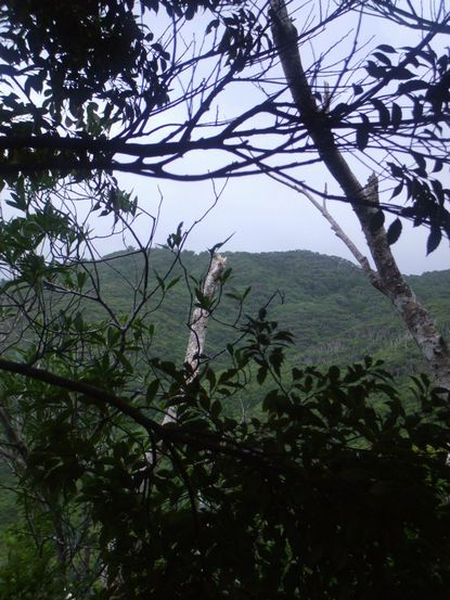 コーヒー山の東川の山.JPG