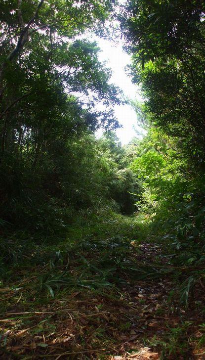 バナナロードの草刈り.JPG