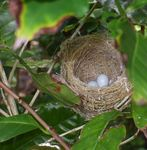 メジロの卵090513.JPG