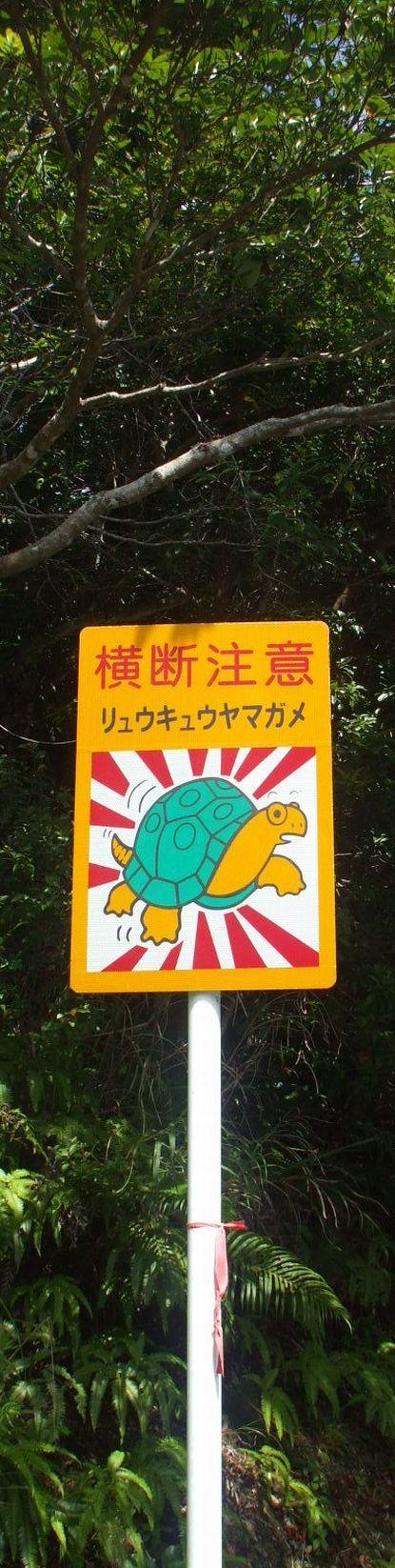 リュウキュウヤマガメの横断注意の看板標識.JPG