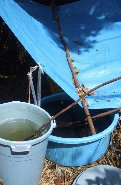 雨水貯蔵システムに溜まった天水.JPG