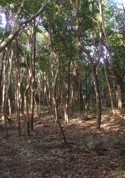 間伐した林庄地1115-2.JPG