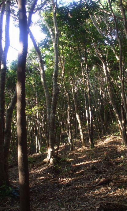 間伐した林床地1115.JPG