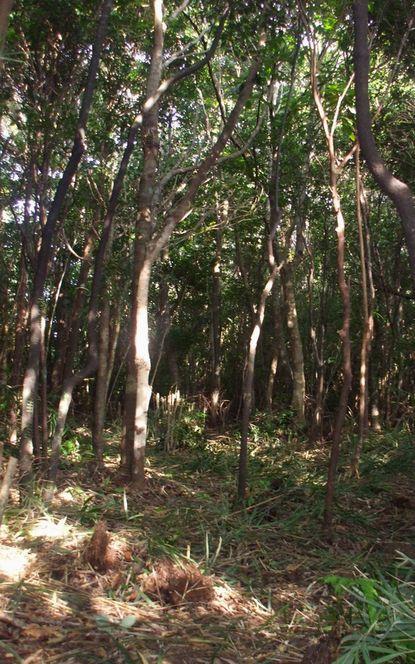 新・苗木置き場の伐採途中.JPG