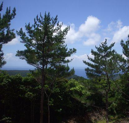 西側には東シナ海が見える.JPG