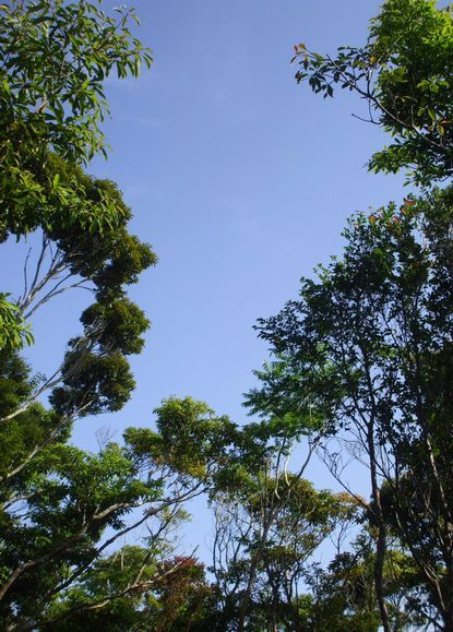竹の広場から見上げた空.JPG