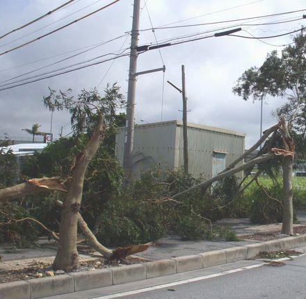 倒壊した街路樹.JPG