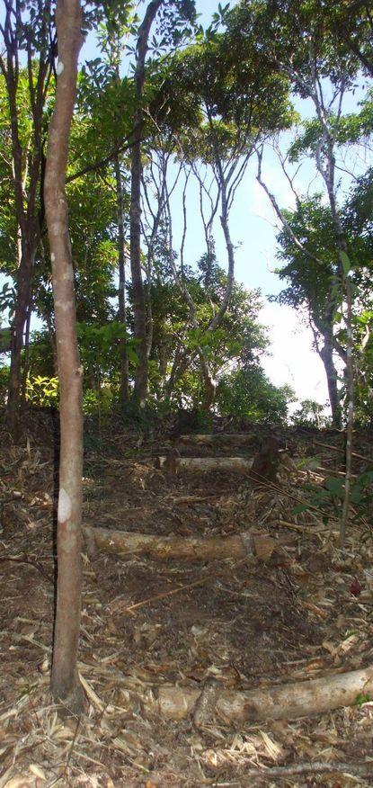 南山への階段1004.JPG