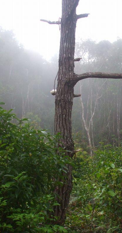 濃霧に包まれるコーヒー山.JPG