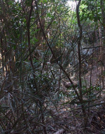 伐採予定地090227−3.JPG