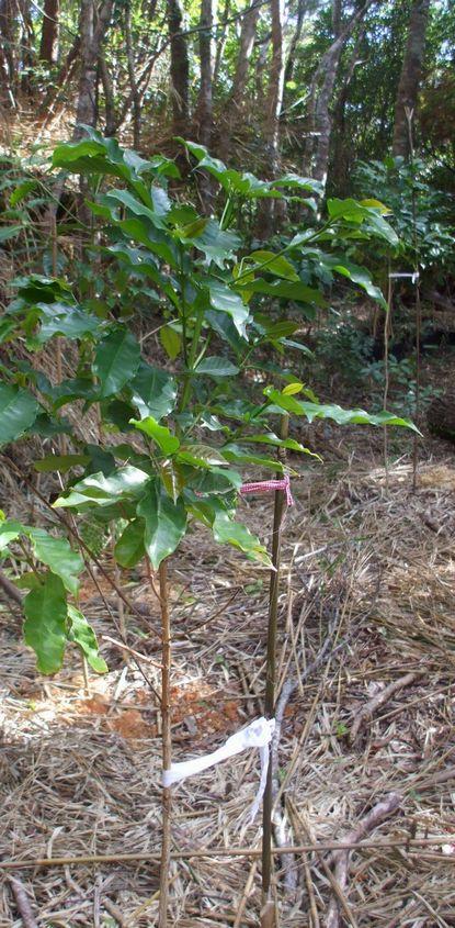 苗木の支柱.JPG