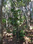 林床地のコーヒー091027.JPG