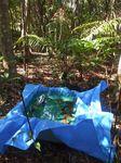 林床地の雨水槽091019.JPG