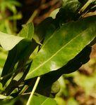 アオカナヘビ110909-5.JPG