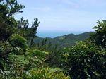 コーヒー山からの展望.JPG