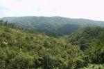 コーヒー山から南方面20130626.JPG