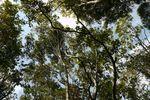コーヒー山の中高木20130227.JPG