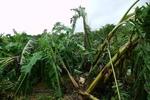 台風11号の被災20120807.JPG