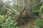 台風17号の被災状況20121003-18.JPG
