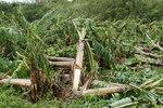 大バナナ園20120828-2.JPG