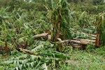 大バナナ園20120828-3.JPG
