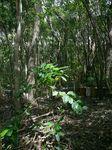 林床地のコーヒー0929.jpg