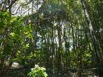 林床地の防風林110530.JPG