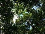 林床地内の空0911.JPG