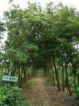 森の卵・比嘉さんのハーブ園111003-1.JPG