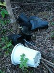 植えた苗木の黒ポット110922.JPG