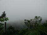 濃霧のコーヒー山120421.JPG