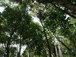 頭上の樹勢120419-1.JPG
