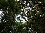 頭上の樹勢120419-2.JPG
