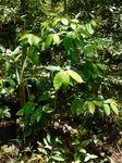 ahinobu-coffee110808.JPG