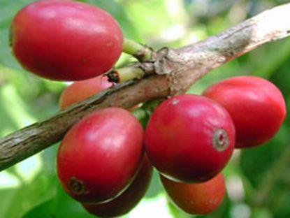 arabian coffee-1.jpg