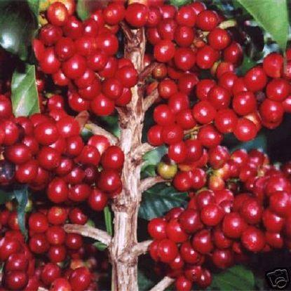 arabian coffee-2.jpg