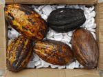 cacao110415-1.JPG
