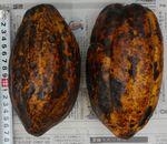 cacao110415-2.JPG