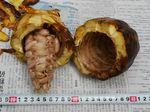 cacao110415-4.JPG