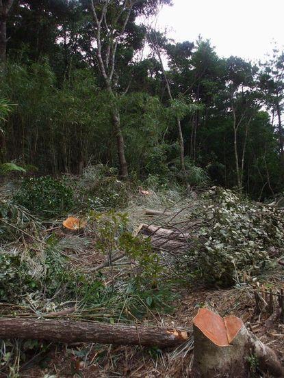 0802伐採作業中1.JPG
