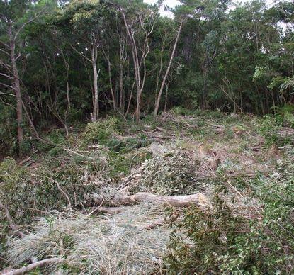 0802伐採作業中3.JPG