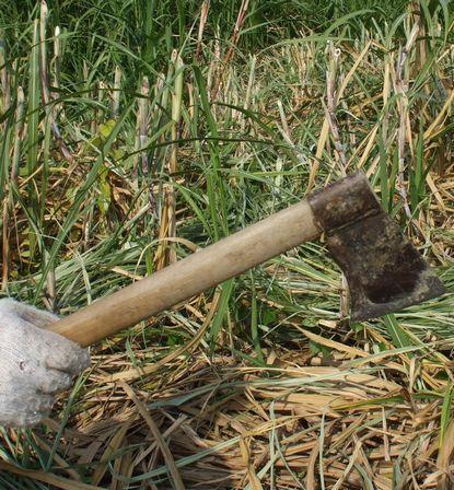 キビ刈りの道具.JPG