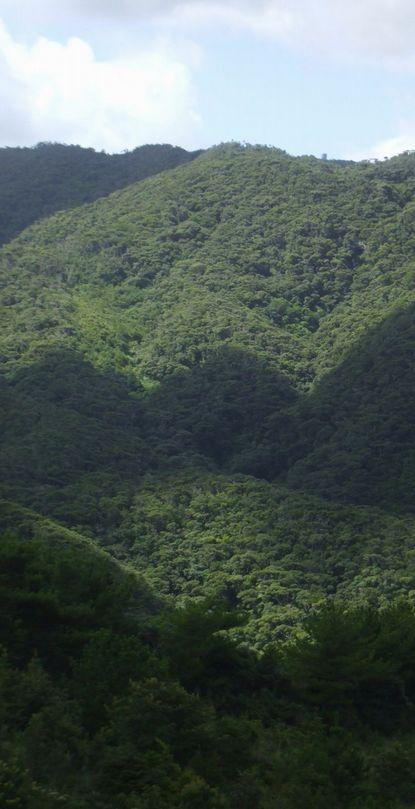 コーヒー山付近0823.JPG