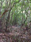 バナナロードから林床地への近道090509.JPG