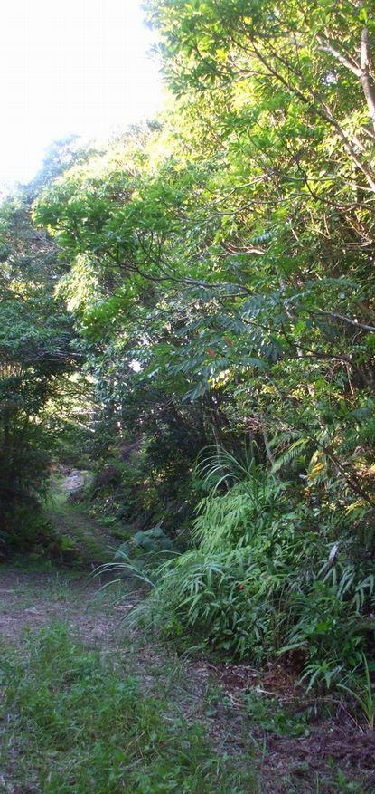 バナナロードと森林の始まり2.JPG