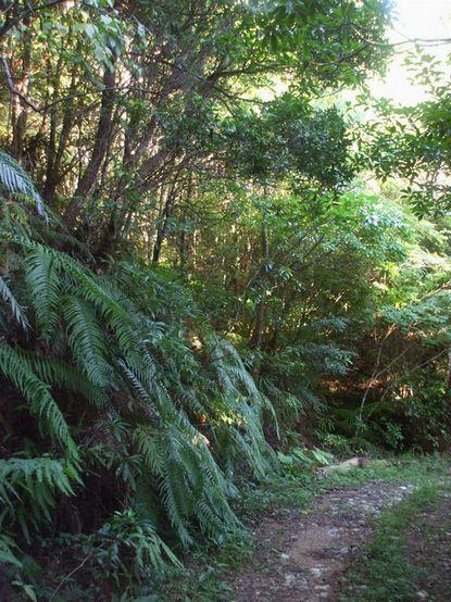 バナナロードと森林の始まり3.JPG